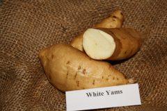 White Yams